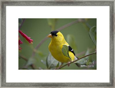 Up Close And Personal Framed Print by Cris Hayes