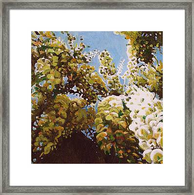 Up Into Wisteria Framed Print by Helen White