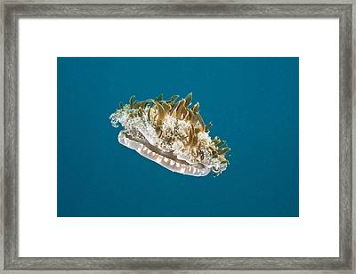 Upside-down Jelly Framed Print by Andrew J. Martinez