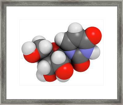 Uridine Nucleoside Molecule Framed Print by Molekuul