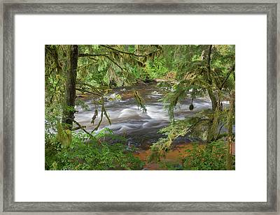 Usa, Alaska, Anan Creek Framed Print by Jaynes Gallery