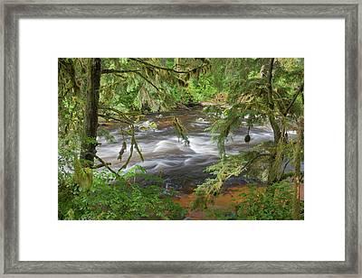 Usa, Alaska, Anan Creek Framed Print