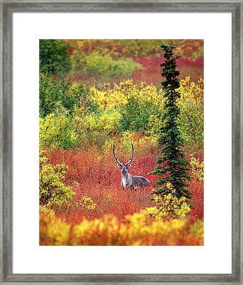 Usa, Alaska, Denali National Park Framed Print