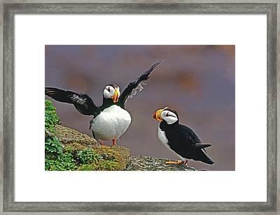 Usa, Alaska, Pribilof Islands, St Framed Print