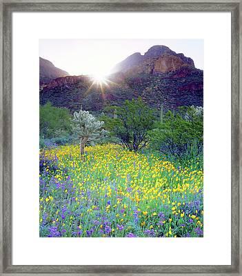 Usa, Arizona, Organ Pipe Cactus Framed Print