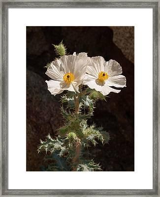 Usa, California, Anza-borrego Desert Framed Print by Ann Collins