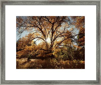Usa, California, Cleveland National Framed Print by Christopher Talbot Frank