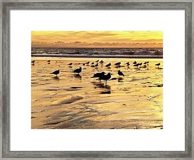 Usa, California, Encinitas Framed Print by Ann Collins