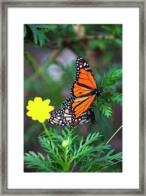 Usa, California, Monterey Framed Print