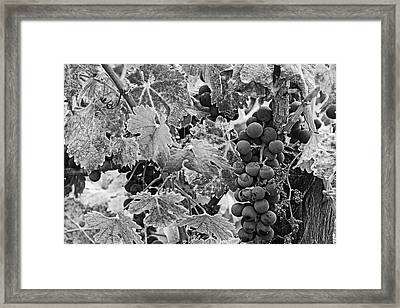 Usa, California, Napa Valley Framed Print