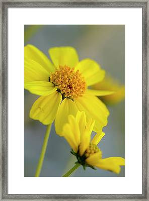 Usa, California, Palm Springs, Indian Framed Print by Kevin Oke