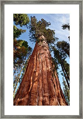 Usa, California, Sequoia National Park Framed Print by Ann Collins