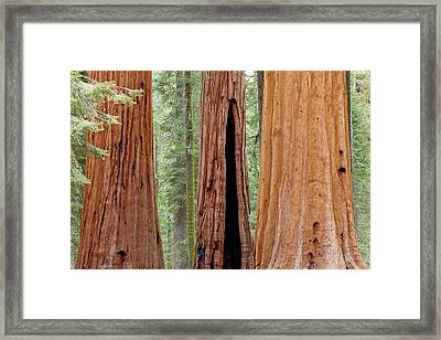 Usa, California, Sequoia National Park Framed Print by Jaynes Gallery
