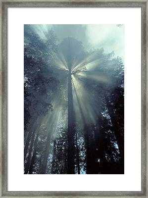 Usa, California, Sun, Smoke, Forest Framed Print
