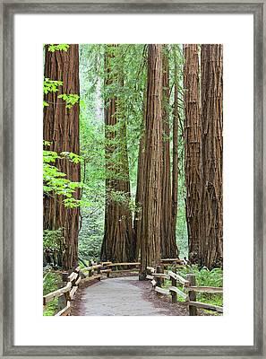 Usa, California Trail Through Muir Framed Print