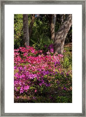 Usa, Florida, Edgewater, Edgewater Framed Print by Lisa S. Engelbrecht