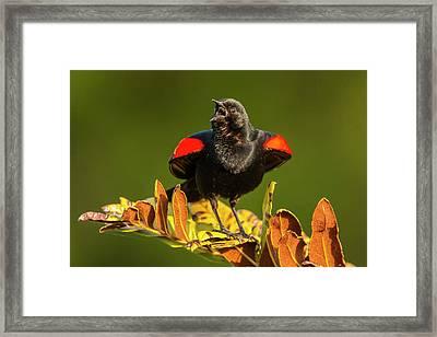 Usa, Florida, Green Cay, Wakodahatchee Framed Print by Jaynes Gallery
