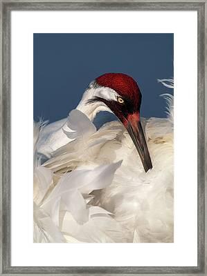 Usa, Florida, Lake Kissimmee Framed Print by Jaynes Gallery