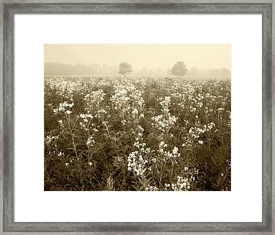 Usa, Kentucky, Late Summer Field Framed Print by Adam Jones