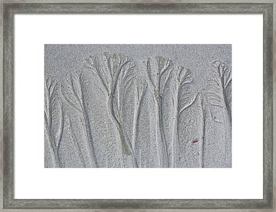 Usa, Maine, Pine Point Framed Print