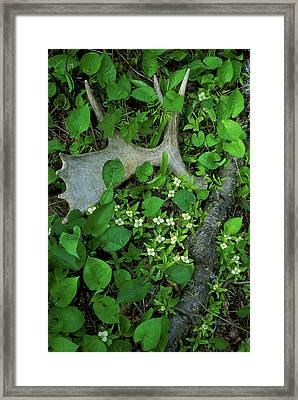 Usa, Michigan, Isle Royale National Framed Print by Jaynes Gallery