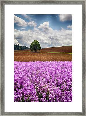 Usa, Oregon, Farming In The Willamette Framed Print