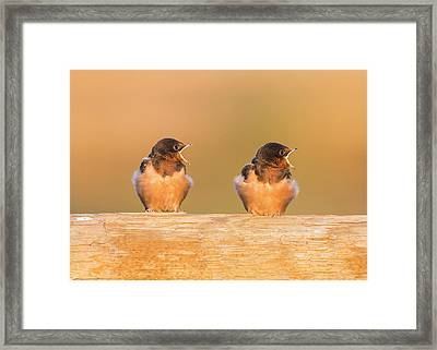 Usa, Red Rock Lakes National Wildlife Framed Print by Elizabeth Boehm