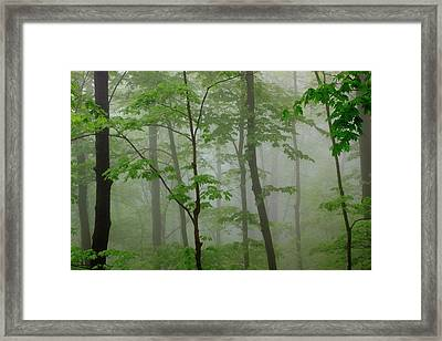 Usa, Tennessee, Foggy Morning Framed Print by Joanne Wells