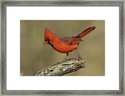 Usa, Texas, Santa Clara Ranch Framed Print
