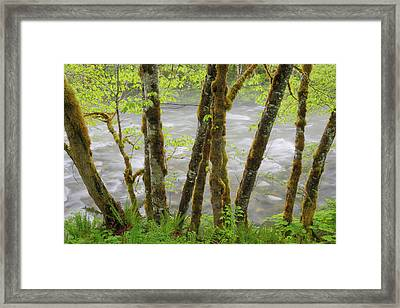 Usa, Washington, Cascade Mountains Framed Print by Jaynes Gallery