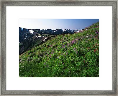 Usa, Washington State, Olympic National Framed Print