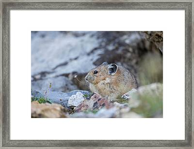Usa, Wyoming, Sublette County, Pica Framed Print by Elizabeth Boehm