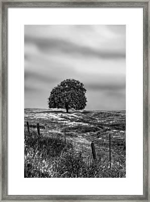 Valley Oak Majesty Framed Print