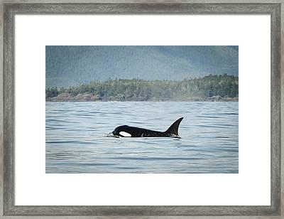 Vancouver Island, Clayoquot Sound Framed Print by Matt Freedman