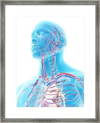 Vascular System In Head Framed Print