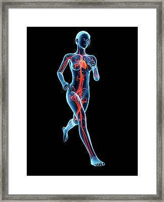 Vascular System Of A Runner Framed Print