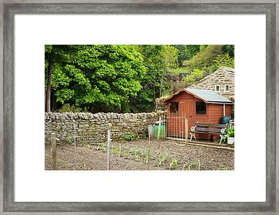 Vegetable Garden Framed Print by Tom Gowanlock