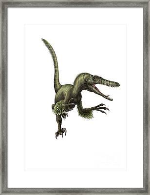 Velociraptor, White Background Framed Print by Yuriy Priymak