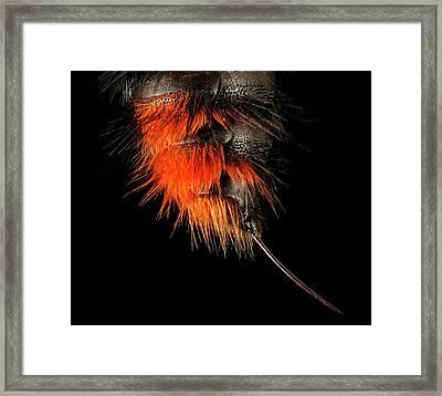 Velvet Ant Framed Print
