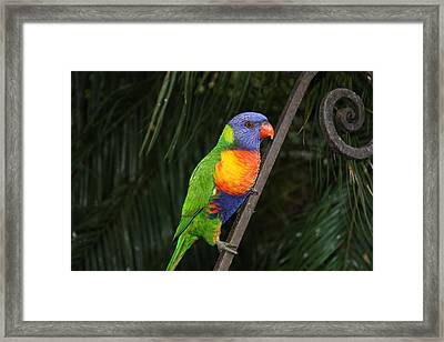 Vibrant Beauty Framed Print by Judy Powell
