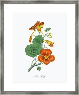 Victorian Botanical Illustration Of Framed Print by Bauhaus1000