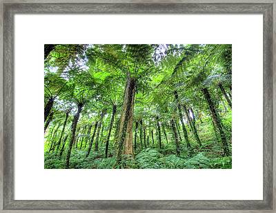 View Of Vegetation In Bali Botanical Framed Print by Jaynes Gallery