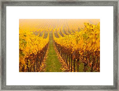Vine Crop In A Vineyard, Riquewihr Framed Print