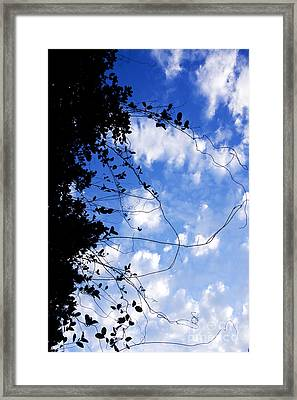 Vine-tangle Framed Print by Jorgo Photography - Wall Art Gallery