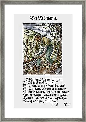 Vinegrower, 1568 Framed Print by Granger