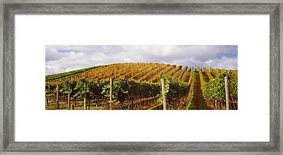 Vineyard At Napa Valley, California, Usa Framed Print