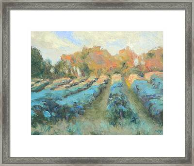 Vineyard Evening Framed Print