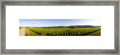 Vineyard, Mercurey, France Framed Print by Panoramic Images