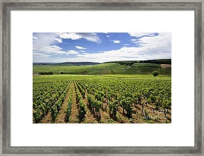 Vineyard Of Cotes De Beaune. Cote D'or. Burgundy. France. Europe Framed Print