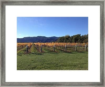 Vineyard Framed Print by Ron Torborg